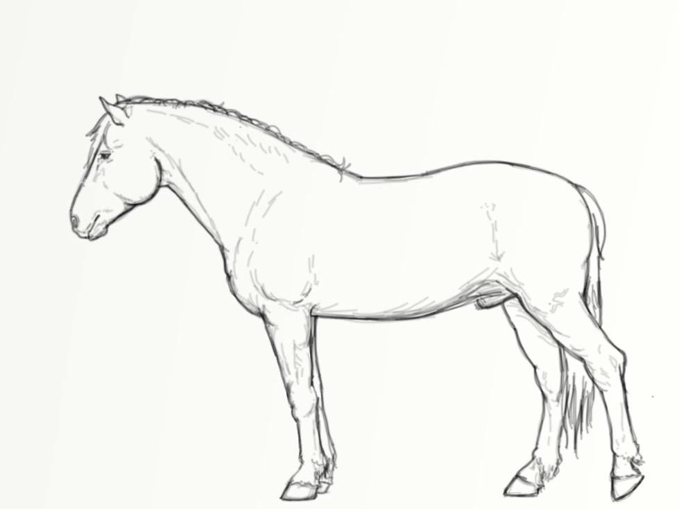 kokovartalohieronta hevostalli net foorumi